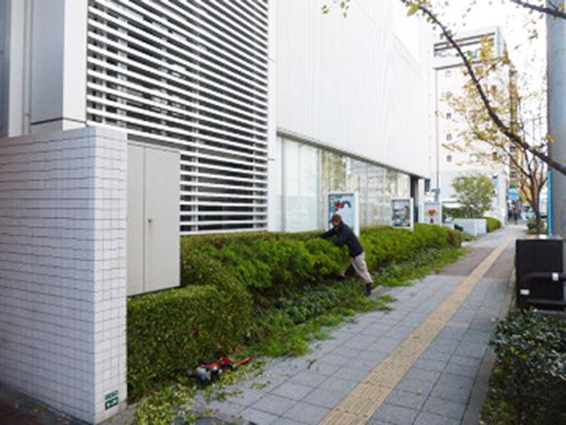 中央区舞鶴 植栽年間管理